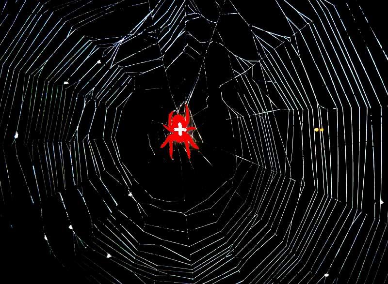 spinnennetz, kreuzspinne, spinne, netz
